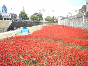 Poppys in the Tower of London